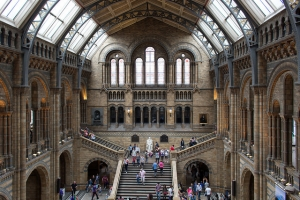 A Busy Day, Natural History Museum