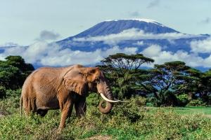 Slide copies April 1992, Amboseli, Kenya, Africa