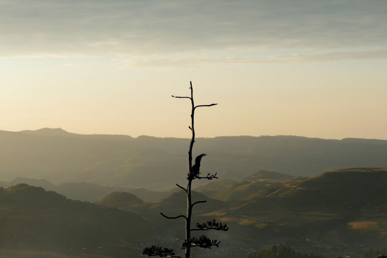 Ethiopia - Bird in Gondar